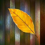 Autumn Leaves over wooden background. EPS10 Royalty Free Stock Image