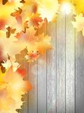 Autumn Leaves over wooden background. EPS10 Stock Photography
