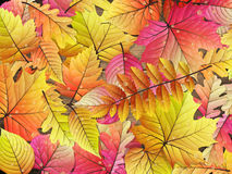 Autumn leaves over wooden background. EPS 10 Royalty Free Stock Photography