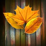 Autumn Leaves over wooden background. plus EPS10 Stock Photos