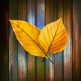 Autumn Leaves over wooden background. plus EPS10 Stock Images