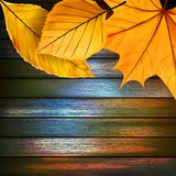 Autumn Leaves over wooden background. plus EPS10 Royalty Free Stock Photos