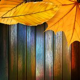 Autumn Leaves over wooden background. plus EPS10 Royalty Free Stock Photography