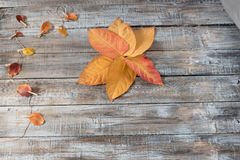 Autumn leaves over wooden background. Thanksg Stock Photos