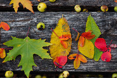 Autumn leaves over wooden background Stock Images