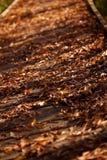 Autumn Leaves Over Wooden Bridge com espaço da cópia Fotografia de Stock