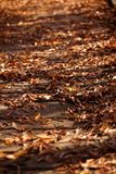 Autumn Leaves Over Wooden Bridge Stock Photography