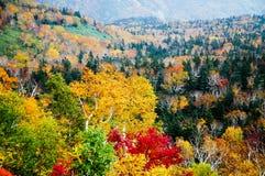 Autumn Leaves på det Shiretoko passerandet, Hokkaido, Japan Royaltyfri Bild