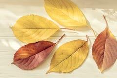 Autumn Leaves på en ljus träbakgrund Royaltyfri Bild