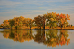 Autumn Leaves på en reflekterande sjö Arkivbild