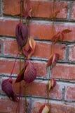 Autumn Leaves på en vägg royaltyfri fotografi