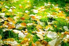 Autumn Leaves på gräs Royaltyfri Fotografi