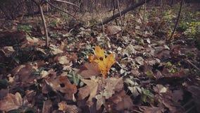 Autumn Leaves på jordspåret ut arkivfilmer