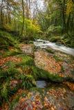 Autumn Leaves på vaggar, Golitha nedgångar, Cornwall arkivfoto