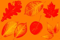 Autumn leaves in paints of abstraction. Royalty Free Stock Image