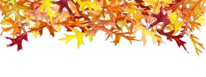 Autumn Leaves panorâmico fotografia de stock