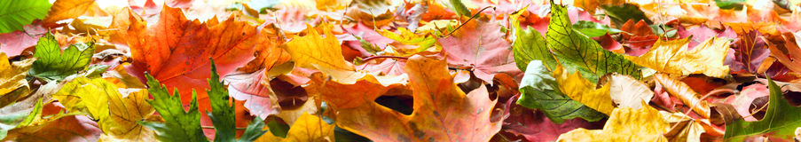 Autumn leaves panorama Royalty Free Stock Photos