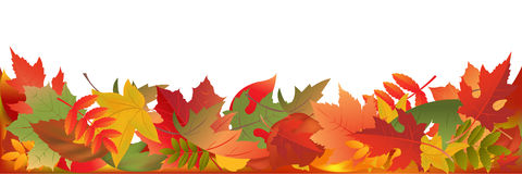 Autumn Leaves Panorama. Vector Stock Photos