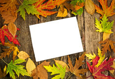 Autumn leaves with paper. Colorful  autumn leaves with blank paper for note Stock Photo
