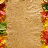 Autumn leaves on parchment Stock Photography