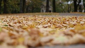 Autumn leaves in the park stock video footage