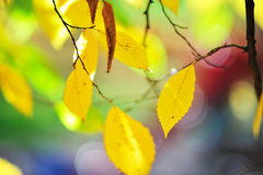 Autumn. Leaves in the park Royalty Free Stock Images