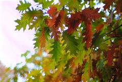 Autumn. Leaves of autumn in the park Stock Photos