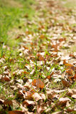 Autumn leaves. In the park Stock Images