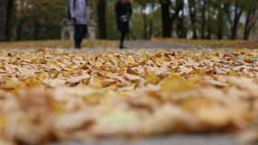 Autumn leaves in the park stock footage