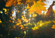 Autumn leaves in park Stock Photography