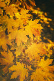 Autumn leaves in park Royalty Free Stock Photos