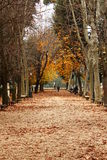 Autumn leaves in park Royalty Free Stock Photo