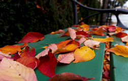 Autumn leaves on park bench Royalty Free Stock Image