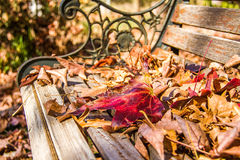 Autumn leaves on a park bench Royalty Free Stock Photography