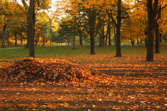 Autumn Leaves. Autumn at the park with a big pile of withered and warm-colored leaves on the ground Stock Photos