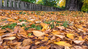 Autumn leaves in park Stock Images