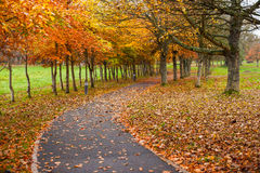 Autumn leaves park footpath Royalty Free Stock Images