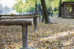 Autumn leaves in the park Stock Photography