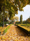 Autumn leaves in a park Royalty Free Stock Image