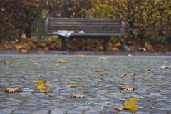 Autumn leaves in park Stock Photos