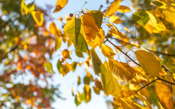 Autumn leaves. In park zone Royalty Free Stock Images