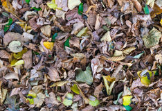 Autumn leaves in park zone Royalty Free Stock Photography