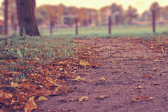 Autumn leaves on path Stock Photo