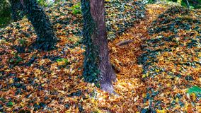 Autumn leaves on path Royalty Free Stock Image