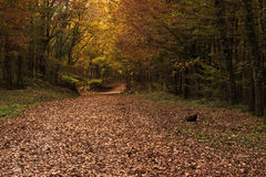 Autumn leaves and the pathway covered with faded leaves Royalty Free Stock Photo