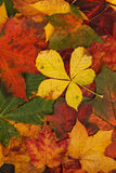 Autumn leaves pattern royalty free stock images