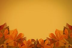 Autumn leaves pattern Stock Image