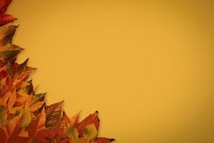 Autumn leaves pattern Stock Photos