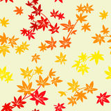Autumn leaves pattern Stock Photo