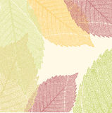 Autumn Leaves Pattern. EPS 8 Royalty Free Stock Photography